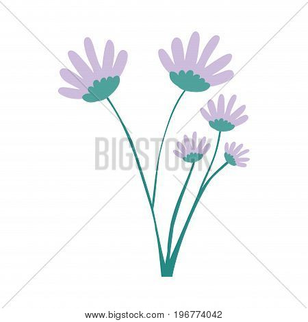 hand drawing lilac color daisy flower bouquet with several ramifications vector illustration