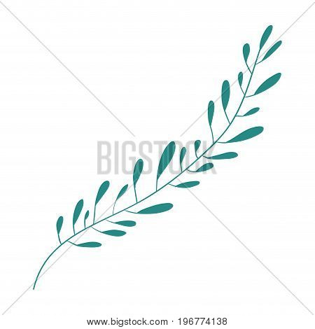 hand drawing green color leaf with several ramifications vector illustration
