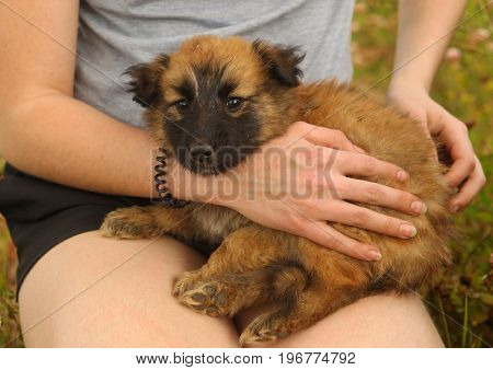 black mask puppy on human lap close up photo