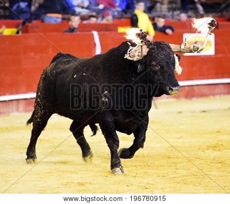 bull in spain with fire in horns