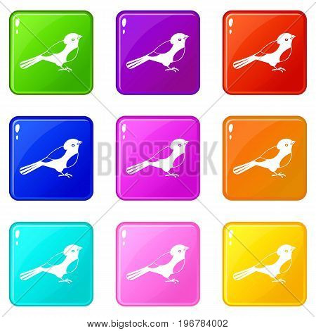 Bird icons of 9 color set isolated vector illustration