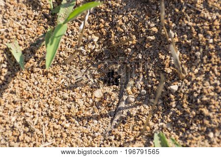 Ant Hole And Queen Ant Close Up Composition Photography