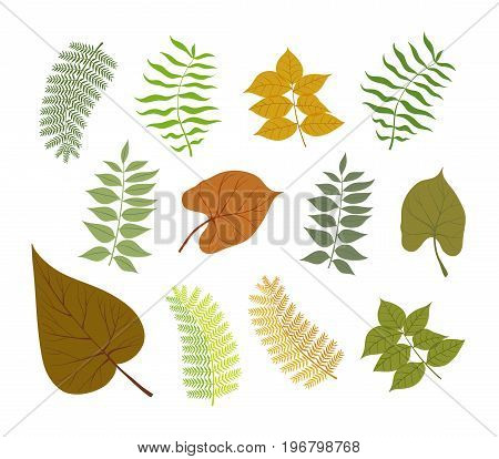 Different types of plant leaves delicate color vector