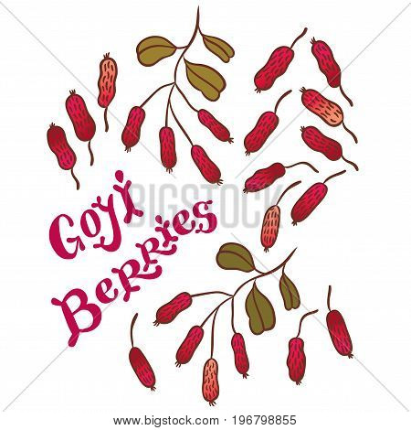 Superfood goji berries - vector illustration of fresh Goji Berries (Wolfberries) with leaves on white background