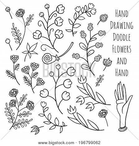 Set of summer flowers  - vector hand drawing line art