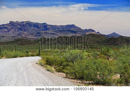 Blue sky copy space and winding road near Tillotson Peak in Organ Pipe Cactus National Monument in Ajo, Arizona, USA including a large assortment of desert plants, which is a short drive west of Tucson.