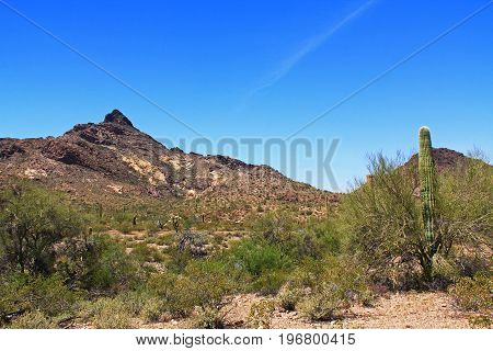 Blue sky copy space near Pinkley Peak in Organ Pipe Cactus National Monument in Ajo, Arizona, USA including a large assortment of desert plants, which is a short drive west of Tucson.