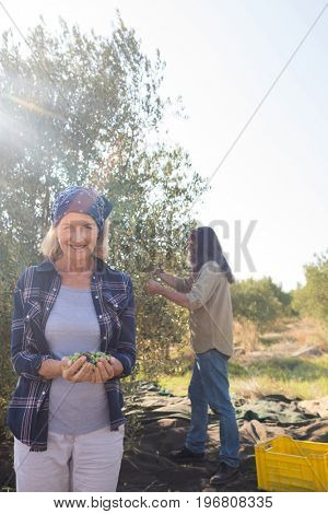 Woman holding harvested olives while man working in background on a sunny day
