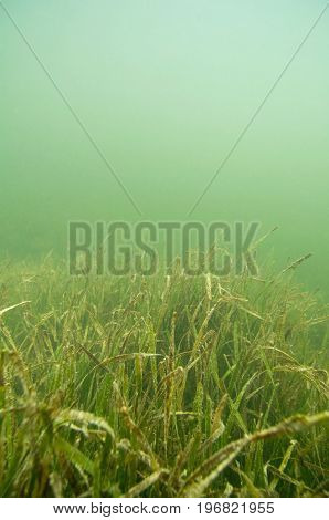 Grassy Seabed, Color Image, Close Up Image, Underwater Shoot