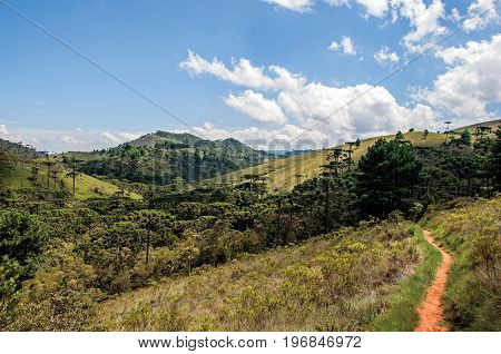 Panoramic view of a pine forest and hills in Horto Florestal, near Campos do Jordão, a city famous for its mountain and hiking tourism. Located in the São Paulo State, southwestern Brazil