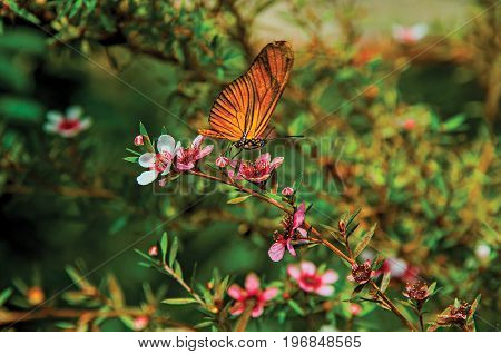 Close-up of a colorful butterfly on top of flowers in Horto Florestal, near Campos de Jordão, a town famous for its mountain and hiking tourism. São Paulo State, southwestern Brazil. Retouched photo