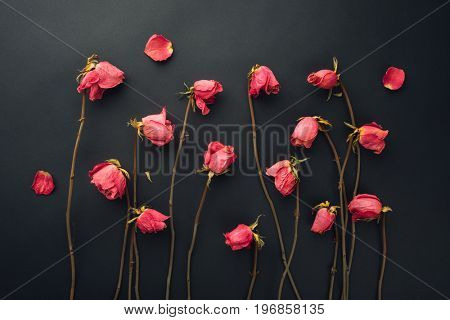 goth style dry roses, black background
