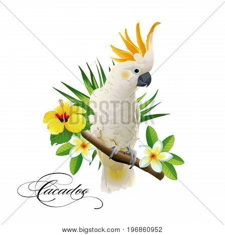 Parrot cockatoo on the tropical branches with leaves and flowers on white background. Vector illustration.