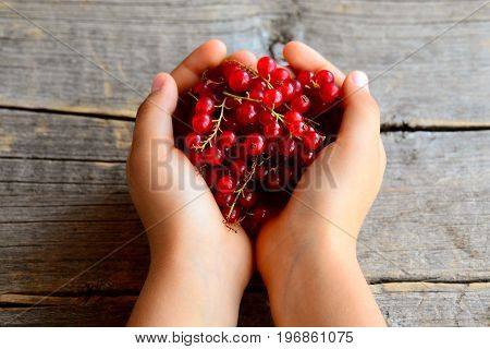 Small child holds a red currant brush in his hands. Ripe red currants. Summer berries background