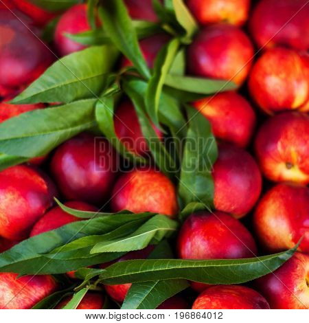 Nectarine Background - Fresh organic Cherry fruits. Frame composition of fruits on market stall close up