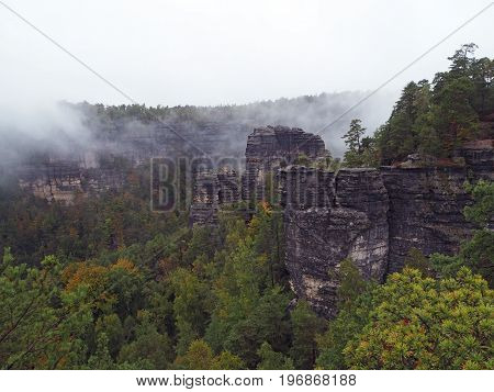 Sandstone Pillars In National Park Czech Switzerland In Foggy Autumn With Pine Tree Forest