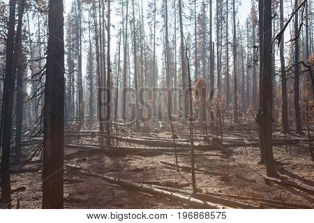 Smokey Forest Fire Aftermath