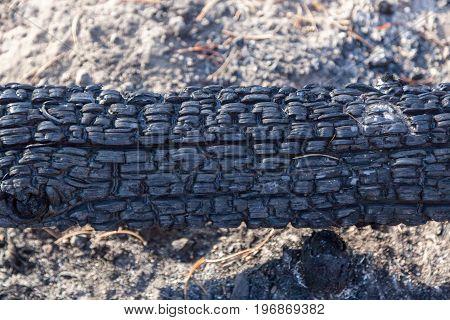 Wildfire Burnt Log