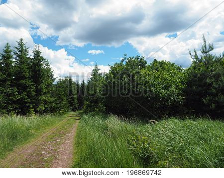 Footpath In The Spring Assorted Forest