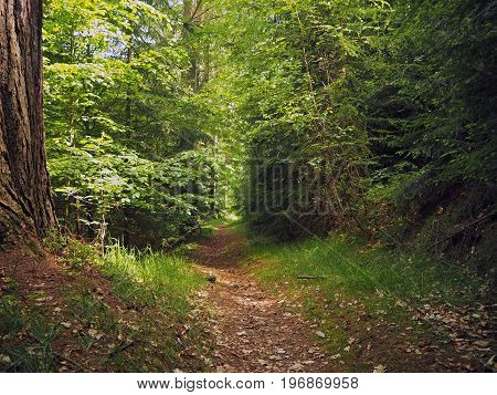 Footpath In The Green Spring Assorted Forest