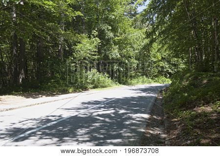 Road in the forest. Montenegro Canyon of the River Tara