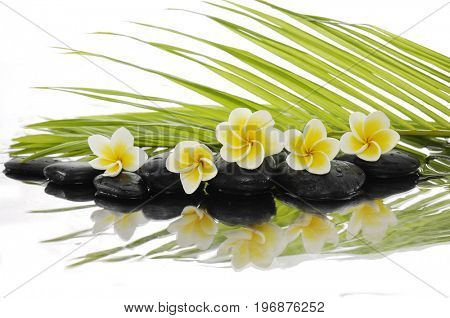 Still life with zen stones and frangipani,palm with reflection