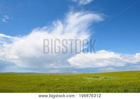 Beautiful white clouds over an Idaho farm field.