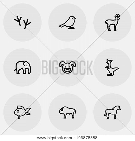 Set Of 9 Editable Animal Outline Icons. Includes Symbols Such As Bird Trace, Kangaroo, Trunked And More