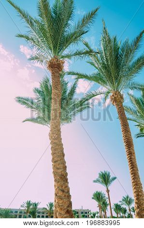 Beautiful palm trees on sky background. Vertical