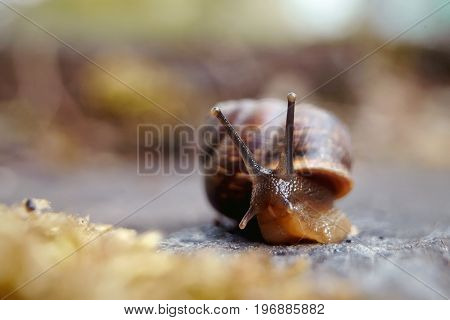 Amusing little snail crawling and moss in the environment.