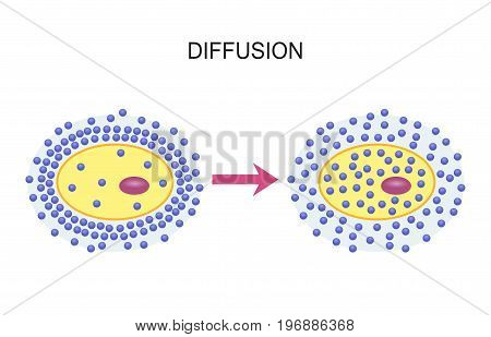 Diffusion Across Cell Membranes. Vector illustration design