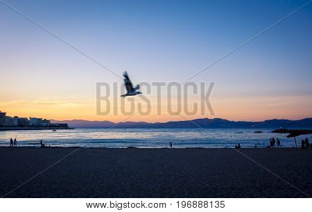 Seagull flying at Sunset or blue hour in quiet beach of l'Escala, Costa Brava, Spain. Mediterranean Sea