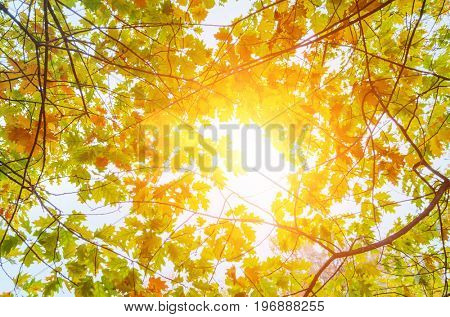 colorful autumn leaves on trees against sunny clear sky