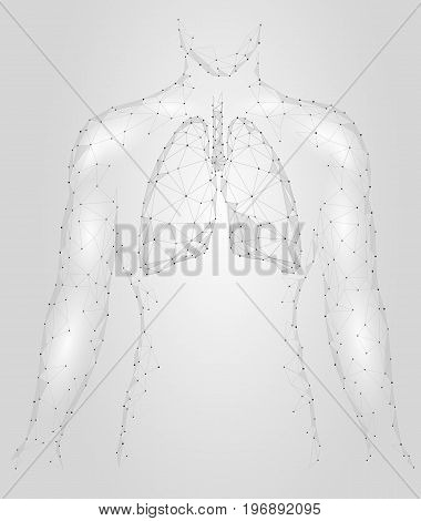 Human Lungs Pulmonary infection Internal Organ. Respiratory system Inside Body Silhouette. Low Poly 3d Connected Dots Triangle Polygonal Design. Gray White Color Background Vector Illustration art
