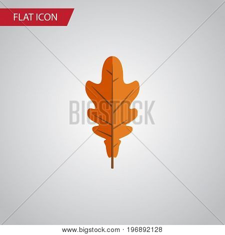Linden Vector Element Can Be Used For Linden, Frond, Leaf Design Concept.  Isolated Frond Flat Icon.