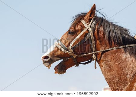 Head of a horse against the sky. Space for text