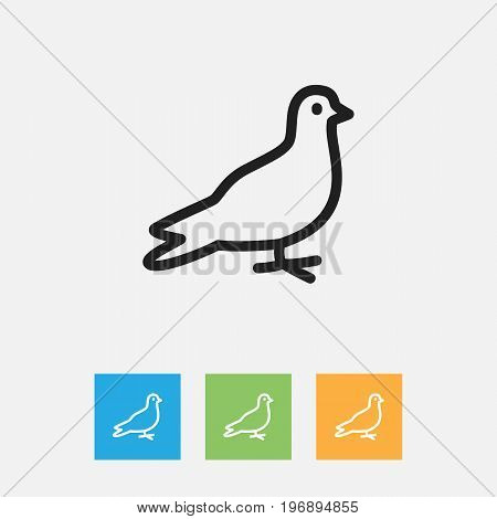 Vector Illustration Of Zoology Symbol On Dove Outline