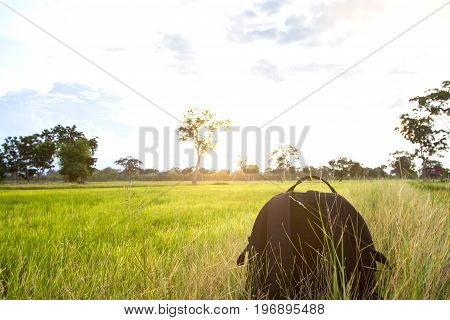 traveler with backpack and looking at wide fields are golden and green in the morning sunrise bright air during his trip in Thailand