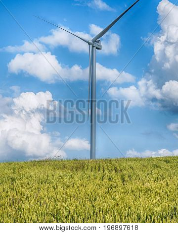 windmills in a field of wheat with blue sunny sky