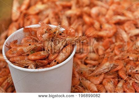 Portion Of Fresh Boiled Pink Small Shrimps Close Up