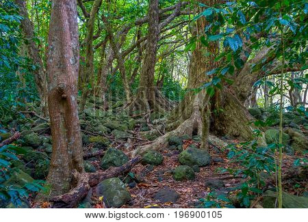 A view of trees in the Iao Valley in Maui Hawaii.
