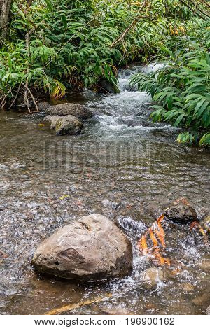 A closeup shot of the Iao River in Maui Hawaii.