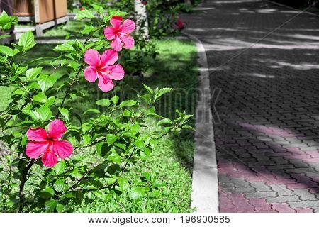 Beautiful tropical flowers in botanical garden