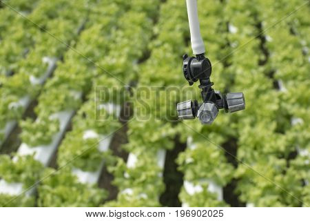 Closeup on agriculture sprinkler head water farm.