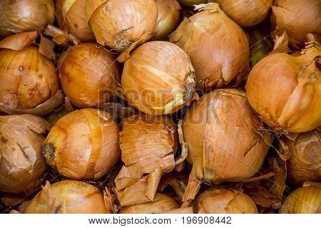 Italian Onions in Fresh Food Market - Catania Italy
