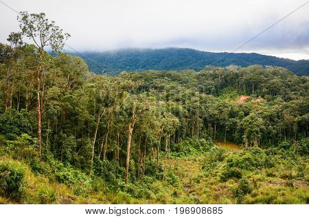 Forest And Mountain In Dalat, Vietnam