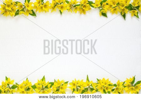 Festive flower arrangement. Flowers loosestrife (lysimachia) in yellow packing on white textured background. Top view flat lay