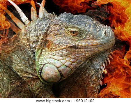 Iguana portrait with fire in the background