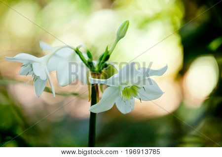 Beautiful White Flower With Filtered Sunlight Background - Selective Focus