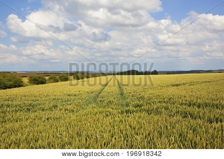 Scenic Wheat Field